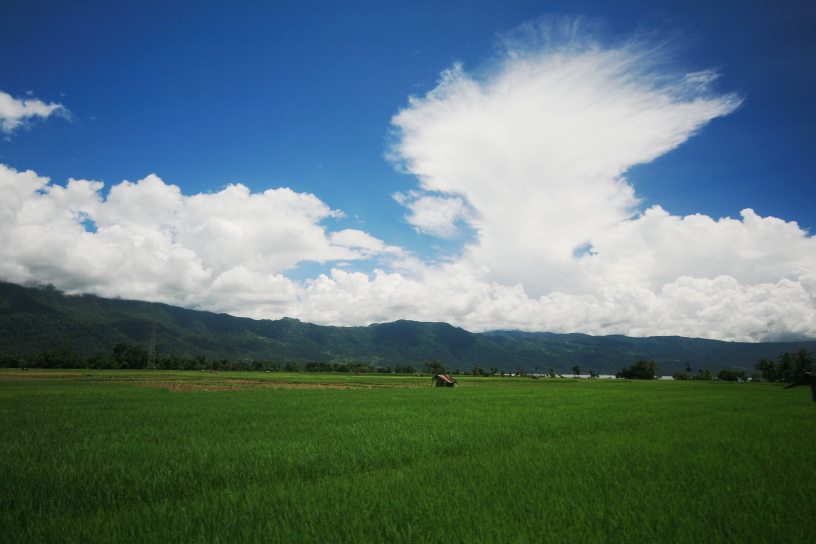 lake maninjau rice fields