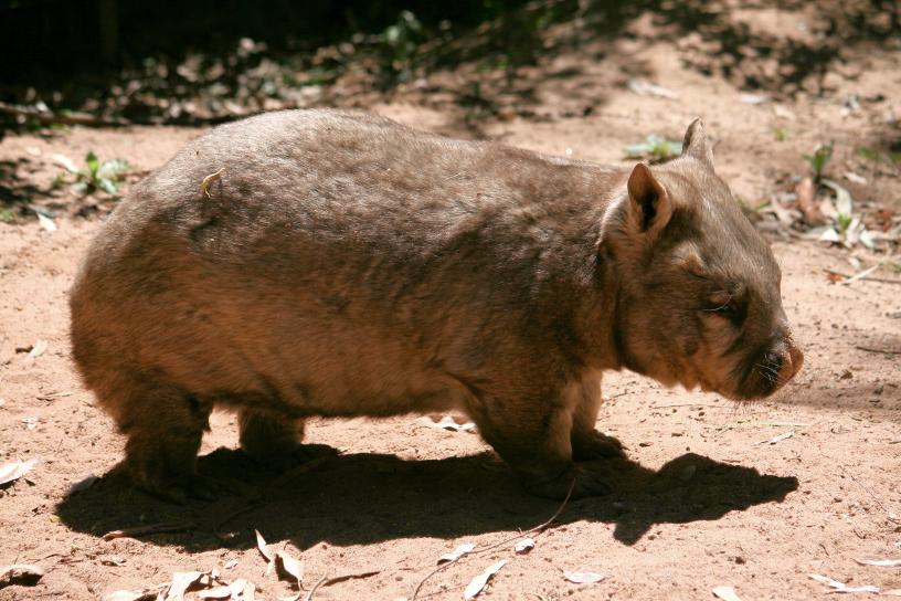 Conservation Nitzus