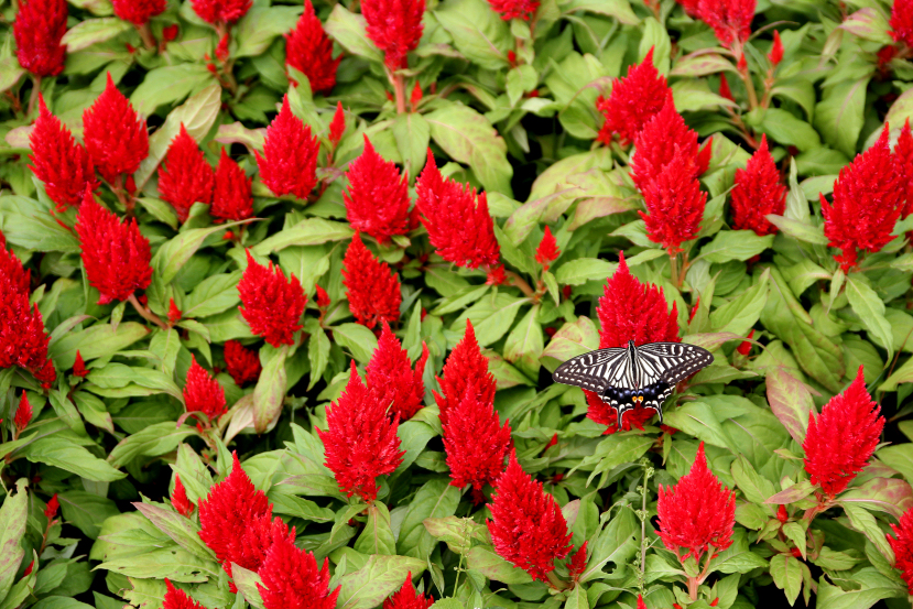 butterfly at shilin garden