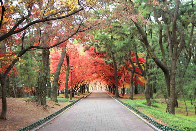 daereungwon japanese maple