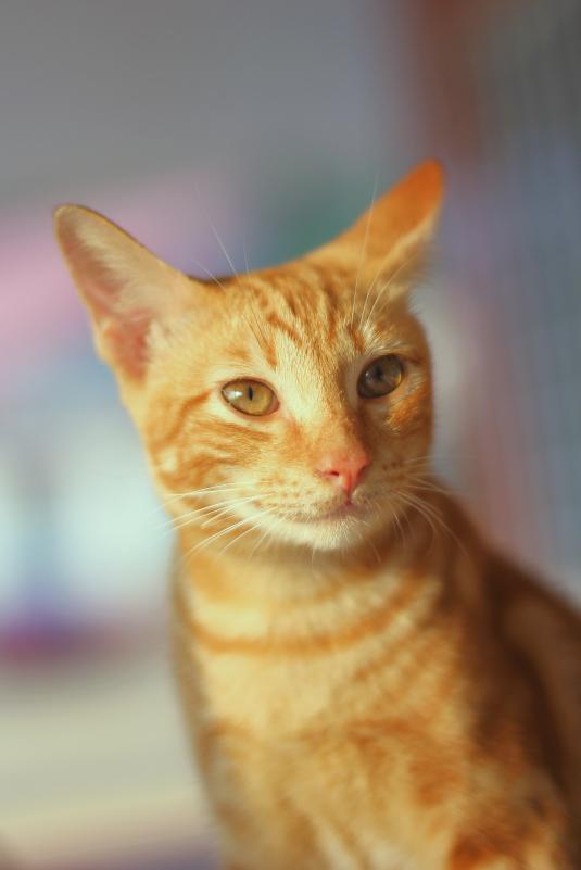 mr. orange the cat