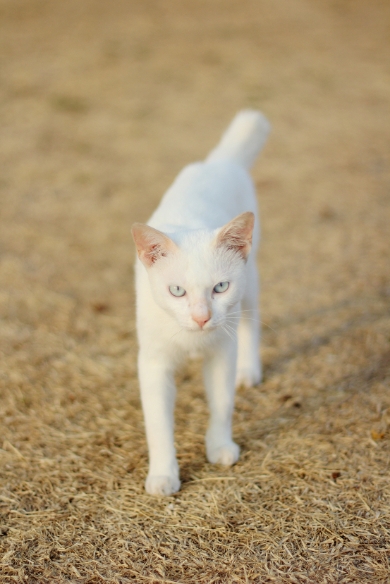 mr. white the cat